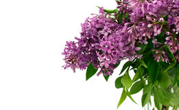 Lilacs with White Space for Text. Closeup on casual arrangement of lilac blossoms with white space for text Stock Images