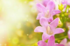 Lilan blommar bakgrund Arkivfoton