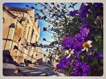 Lilan blommar blå himmel i centrumbyggnad fotografering för bildbyråer