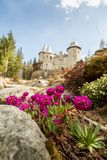 Lilan blommar en Savoia slott i Gressoney Arkivbilder