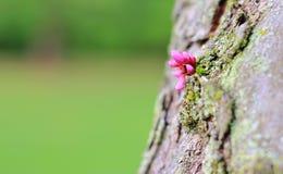 Lilan blommar - färger i naturbakgrund - överlevnad av modernaturen Arkivfoton
