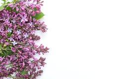 Lilan blommar för ferien och underbara lyckönskan Royaltyfri Bild