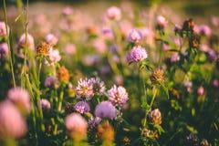 Lilan blommar i ängen arkivfoto