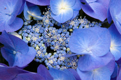 Lilan blommar i botaniska trädgården royaltyfri foto
