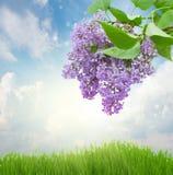 Lilan blommar i solig dag Arkivfoton