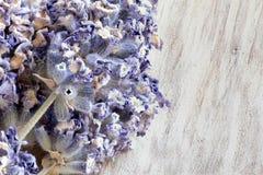 Lilan blommar lavendel Arkivbild