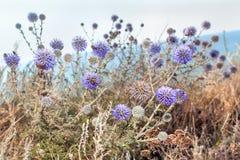 Lilan blommar med kryp Arkivfoto