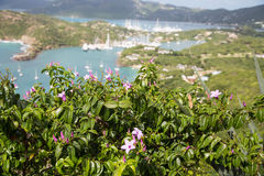 Lilan blommar med yachthandfatet i bakgrund Royaltyfri Foto