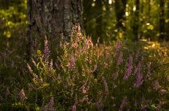 Lilan blommar nära ett träd Arkivbilder