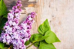 Lilan blommar på gammal träbakgrund Arkivfoto