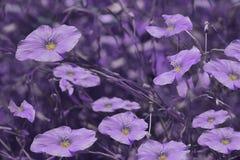 Lilan blommar på oskarp violett bakgrund vektor för detaljerad teckning för bakgrund blom- Purpura vildblommar i gräset Arkivfoton