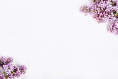 Lilan blommar på rosa bakgrund på hörn av vit bakgrund royaltyfri foto