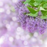 Lilan blommar trädet Royaltyfri Bild