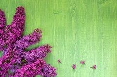 Lilan förgrena sig på ljus trägrön bakgrund, sommartid arkivbilder