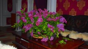 Lilas au printemps Images stock