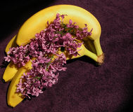 Lilas and Bananas Stock Image