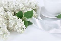 Lilas blanc avec le ruban blanc au matin Images stock
