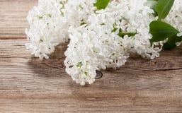 Lilas blanc sur de vieux conseils photo stock