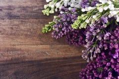 Lilas colorés Image libre de droits