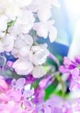 Lilas dans différentes couleurs photo stock