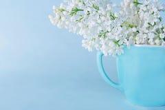 Lilas en un fondo azul claro Fotografía de archivo libre de regalías