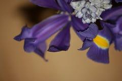 Lilas et jaune dans le macro Photographie stock libre de droits