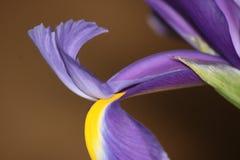 Lilas et jaune dans le macro Photos libres de droits