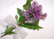 Lilas púrpuras imagenes de archivo
