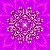 Lilas pink vibrant mandala. Lilas pink vibrant flower mandala Royalty Free Stock Photography