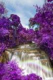Lilasidor på vattenfall för Huay maekhamin Arkivfoton