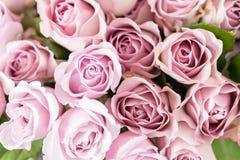 Lilaträdgården steg Bukettblommor av rosor i den glass vasen Sjaskig stilhemdekor Morgondagg - variation wallpaper Royaltyfri Foto
