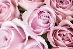 Lilaträdgården steg Bukettblommor av rosor i den glass vasen Sjaskig stilhemdekor Morgondagg - variation wallpaper Arkivbilder