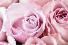 Lilaträdgården steg Bukettblommor av rosor i den glass vasen Sjaskig stilhemdekor Morgondagg - variation wallpaper Arkivbild