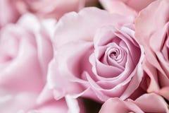 Lilaträdgården steg Bukettblommor av rosor i den glass vasen Sjaskig stilhemdekor Morgondagg - variation wallpaper Royaltyfri Bild