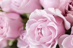 Lilaträdgården steg Bukettblommor av rosor i den glass vasen Sjaskig stilhemdekor Morgondagg - variation wallpaper Arkivfoto