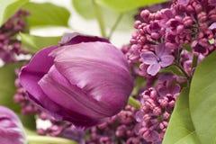 lile purpury Fotografia Stock