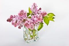 lile purpury Zdjęcia Royalty Free