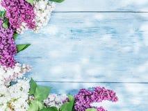 lili kwitnący kwiaty zdjęcia royalty free