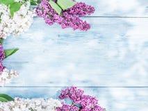 lili kwitnący kwiaty zdjęcia stock