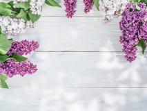 lili kwitnący kwiaty obraz stock