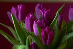 Lili tulipany Pączek, płatki, bukiet Zakończenie Fotografia Stock