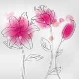 Lilia. Vector pictures with pink lilia flowers Royalty Free Stock Photos