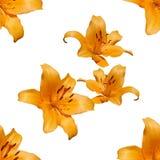 Lilia seamless pattern. Illustration royalty free illustration