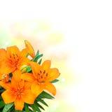 Lilie blüht Blumenstrauß auf weißem Hintergrund Lizenzfreies Stockbild