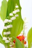 Lilie des Tales Stockfotografie
