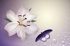 Lilie und Fliegenschmetterling Lizenzfreies Stockfoto