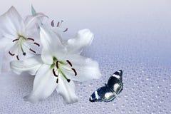 Lilie und Fliegenschmetterling Stockbild