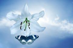 Lilie und Fliegenschmetterling Stockbilder