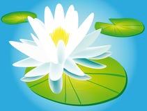 Lilie und Wasserlilie Lizenzfreies Stockfoto