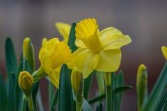 Lilie vor grünen Blättern lizenzfreies stockfoto